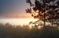 Schöner nebelhafter Sonnenaufgang auf See stockbild