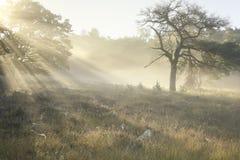 Schöner nebelhafter Sonnenaufgang auf Waldwiese lizenzfreie stockbilder