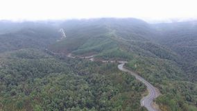 Schöner nebeliger Wald Neuseeland stock footage