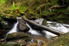 Schöner Nebenfluss Stockbilder