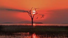 Schöner orange Sonnenuntergang hinter einem alten toten bloßen Baum auf See Kariba, Simbabwe lizenzfreies stockbild