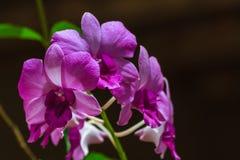 Schöner Orchideenblumenstrauß von den Blumen, zum schön zu blühen Lizenzfreie Stockfotografie