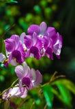 Schöner Orchideenblumenstrauß von den Blumen, zum schön zu blühen Lizenzfreies Stockbild
