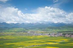 Schöner Ozean von Blumen machen Menyuan den Himmel auf Erde Stockfotos