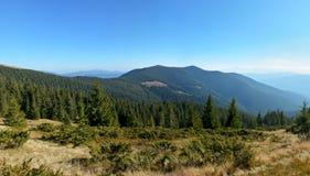 Schöner Panoramablick des Gebirgshügels umfasst mit Nadelbäumen Lizenzfreies Stockbild