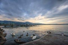 Schöner Panoramablick von Rapperswil, die Schweiz: Enten und Schwäne auf See Zürich mit Gebirgszügen und Sonnenuntergang als Hint Stockbilder