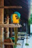 Schöner Papagei Lizenzfreies Stockfoto