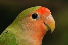 Schöner Papagei stockbilder