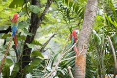Schöner Papagei stockfotos