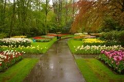 Schöner Park Stockbilder