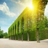 Schöner Park beleuchtet durch die Sonne Stockfotos