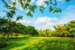 Schöner Park der Parkszene öffentlich mit grüner Rasenfläche, gree stockfotografie