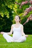 Schöner Park der schwangeren Frau im Frühjahr stockfotografie