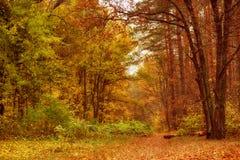Schöner Park des Herbstes Stockfoto
