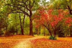 Schöner Park des Herbstes Stockbild