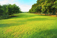 Schöner Park des Morgenlichtes öffentlich mit der grünen Rasenfläche Stockfotos