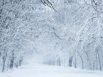 Schöner Park in einer Mitte des Winters Stockbild