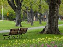 Schöner Park im Frühjahr Stockfotografie