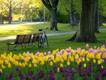 Schöner Park im Frühjahr Stockfoto