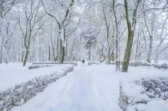Schöner Park im Winter Stockfotos