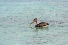 Schöner Pelikan auf dem Meer lizenzfreies stockbild