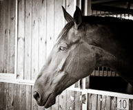 Schöner Pferden-Kopf stockbild