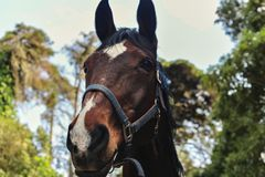 Schöner Pferdeportrait stockfoto