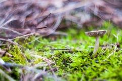 Schöner Pilz auf dem bunten Hintergrund Lizenzfreie Stockfotos