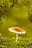 Schöner Pilz im fantastischen Holz Lizenzfreie Stockbilder