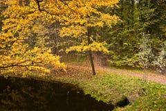 Schöner Platz im Herbstpark Lizenzfreies Stockbild