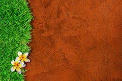 Schöner Plumeria auf dem Gras für Netz Hintergrund Stockfotografie