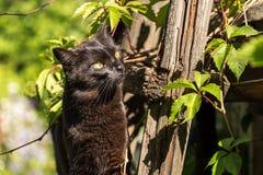 Schöner Porträtabschluß der schwarzen Katze oben draußen in der Natur im Sonnenlicht Stockbilder