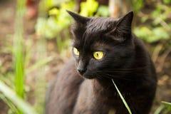 Schöner Porträtabschluß der schwarzen Katze oben in der Natur Stockbilder