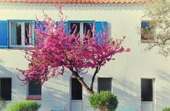 Schöner purpurroter Baum nahe Haus Stockbild