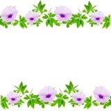 Schöner purpurroter Blumen- und Blattrahmen auf weißem Hintergrund Stockfotos
