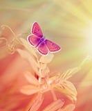 Schöner purpurroter Schmetterling auf Frühlingsgras stockfotos