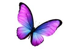 Schöner purpurroter Schmetterling lokalisiert auf weißem Hintergrund stockbild