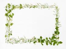Schöner Rahmen der Wiesenblume Stockfotos