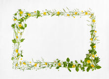 Schöner Rahmen der Wiesenblume Lizenzfreie Stockfotografie