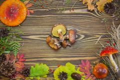 Schöner Rahmen von natürlichen Materialien, Pilze, Kegel, Herbstlaub, Fliegenpilze, Beeren Brauner hölzerner Hintergrund des Herb Lizenzfreie Stockfotos