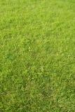 Schöner Rasen Lizenzfreie Stockbilder