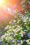 Schöner Rasen mit verschiedenen Farben und Rasen an einem sonnigen Tag landschaftsgestaltung Die Zusammensetzung von kleinen Blum lizenzfreie stockfotos