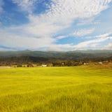 Schöner Reis stellt im Gebirgs- und Wolkenhimmel auf Lizenzfreies Stockbild