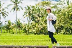 Schöner Reisender des jungen Mädchens im Hut, Gläser, mit Rucksack geht entlang ein Reisfeld mit grünem Gras, Palmen, Himmel Bali stockfotografie