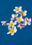 Schöner rosa Blütenstand lizenzfreies stockfoto