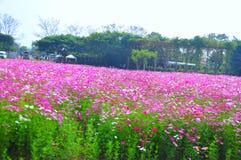 Schöner rosa Blumengarten an Jim Thompsons Bauernhof, Thailand Lizenzfreies Stockfoto