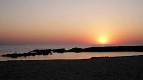 Schöner rosa Sonnenuntergangsonnenaufgang auf dem Meer, völlige Ruhe, fliegende Seemöwen stock video