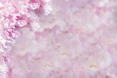 Schöner rosafarbener Blumenhintergrund Stockfoto