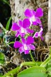 Schöner rosafarbener Orchidee? Hintergrund erstellt in ps Stockbild