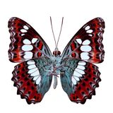 Schöner roter Schmetterling, gemeiner Kommandant (moduza procris) darunter lizenzfreie stockbilder